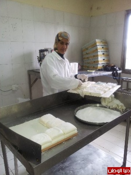 بالصور:صناعة الجبنة الايطالية بأيادي فلسطينية لتنافس الأجبان الاسرائيلية 3909897307.jpg