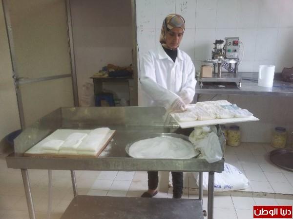 بالصور:صناعة الجبنة الايطالية بأيادي فلسطينية لتنافس الأجبان الاسرائيلية 3909897309.jpg