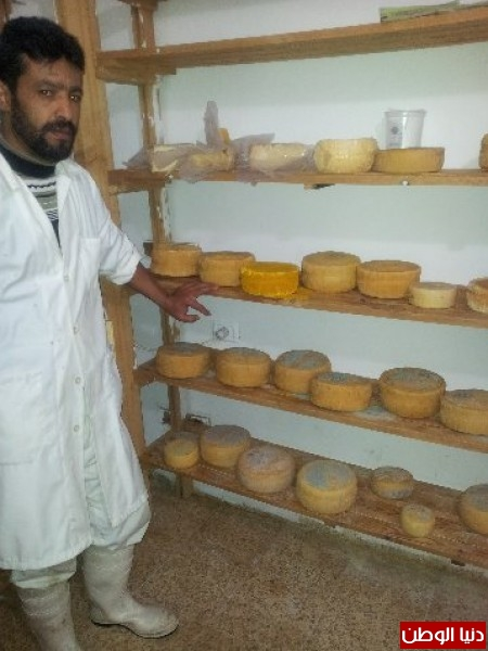 بالصور:صناعة الجبنة الايطالية بأيادي فلسطينية لتنافس الأجبان الاسرائيلية 3909897319.jpg