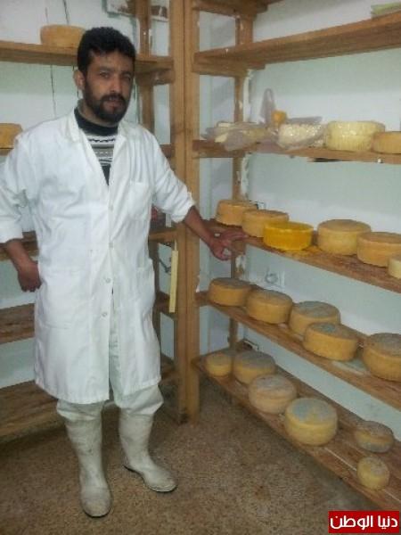 بالصور:صناعة الجبنة الايطالية بأيادي فلسطينية لتنافس الأجبان الاسرائيلية 3909897321.jpg