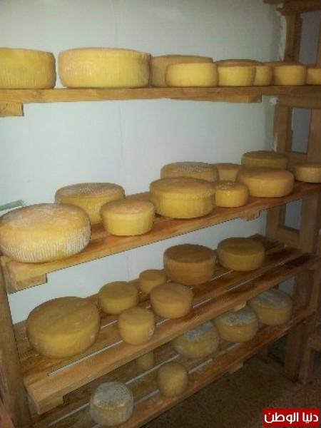 بالصور:صناعة الجبنة الايطالية بأيادي فلسطينية لتنافس الأجبان الاسرائيلية 3909897322.jpg