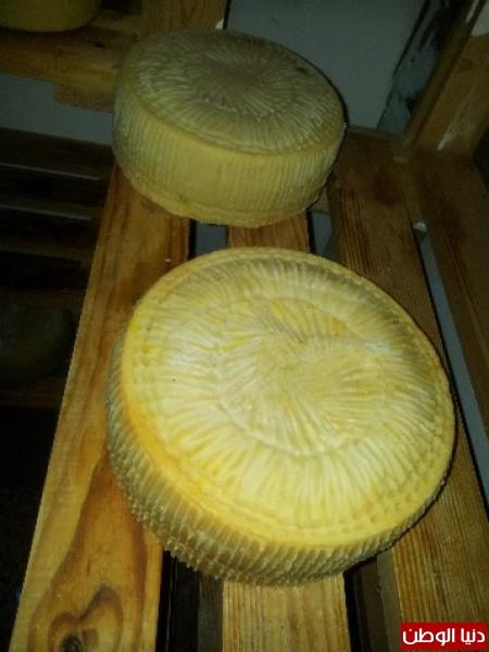 بالصور:صناعة الجبنة الايطالية بأيادي فلسطينية لتنافس الأجبان الاسرائيلية 3909897330.jpg