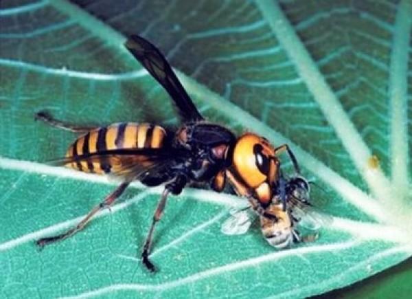 بالصور أخطر حشرات العالم