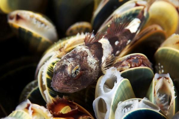صـور مذهلة لكائنات بحرية من الأعماق 3909922018.jpg