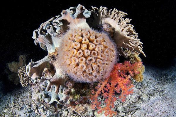 صـور مذهلة لكائنات بحرية من الأعماق 3909922020.jpg