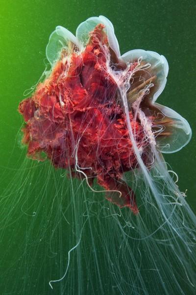 صـور مذهلة لكائنات بحرية من الأعماق 3909922023.jpg