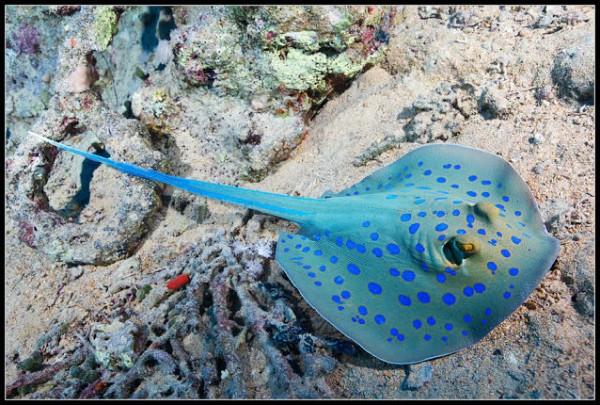صـور مذهلة لكائنات بحرية من الأعماق 3909922024.jpg