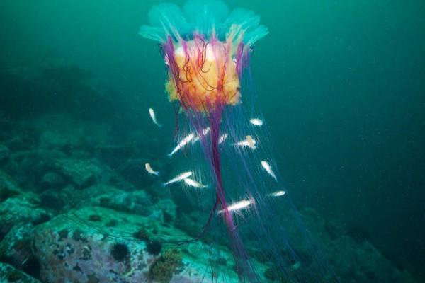 صـور مذهلة لكائنات بحرية من الأعماق 3909922025.jpg