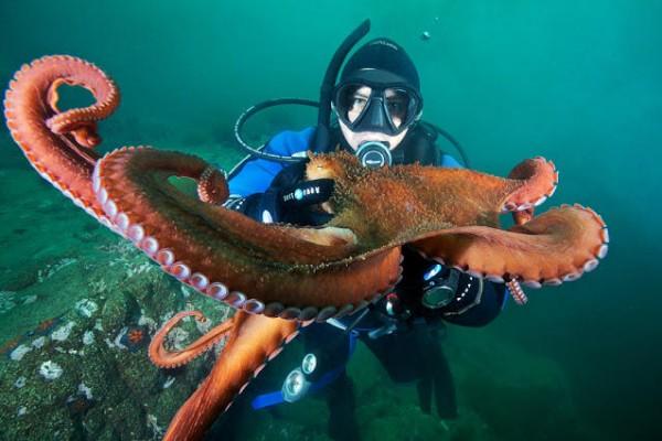 صـور مذهلة لكائنات بحرية من الأعماق 3909922027.jpg