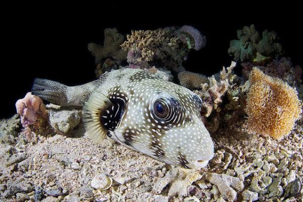 صـور مذهلة لكائنات بحرية من الأعماق 3909922028.jpg