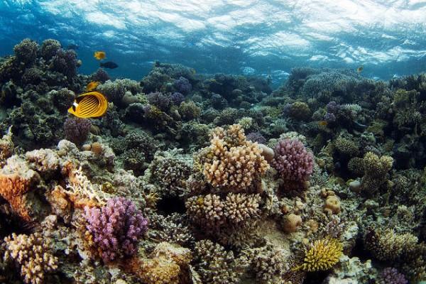 صـور مذهلة لكائنات بحرية من الأعماق 3909922033.jpg
