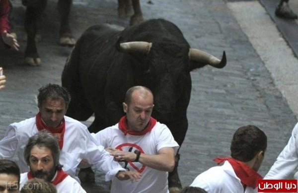رهيبة مهرجان مطاردة الثيران اسبانيا 3909965569.jpg