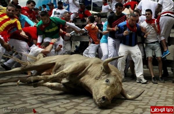 رهيبة مهرجان مطاردة الثيران اسبانيا 3909965570.jpg