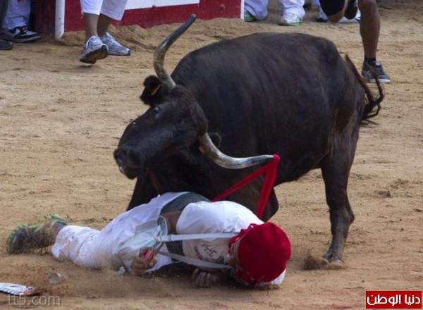 رهيبة مهرجان مطاردة الثيران اسبانيا 3909965578.jpg