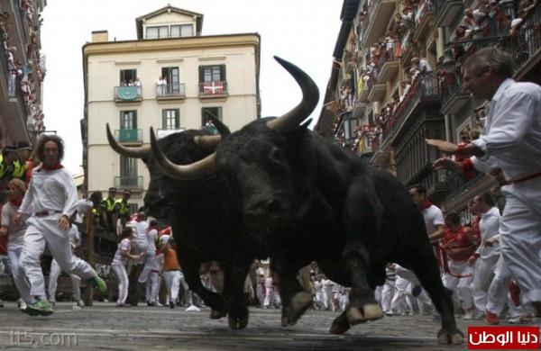 رهيبة مهرجان مطاردة الثيران اسبانيا 3909965579.jpg