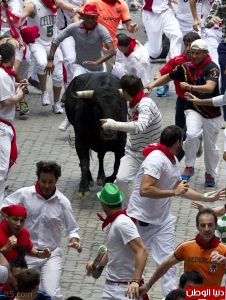 رهيبة مهرجان مطاردة الثيران اسبانيا 3909965580.jpg