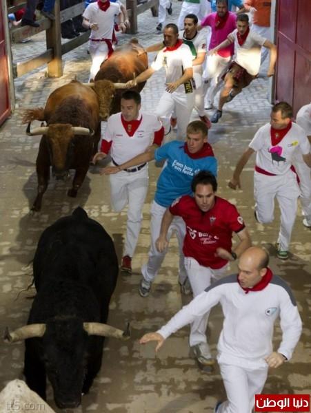 رهيبة مهرجان مطاردة الثيران اسبانيا 3909965581.jpg