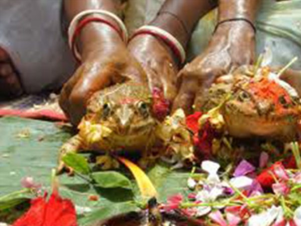 مراسم زفاف ضفدعين الهند!!