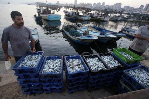 شاهد بالصور توافر للأسماك بغزة 3909985368.jpg