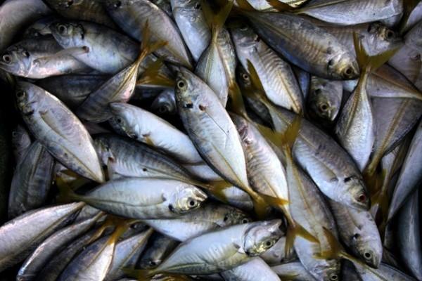 شاهد بالصور توافر للأسماك بغزة 3909985369.jpg