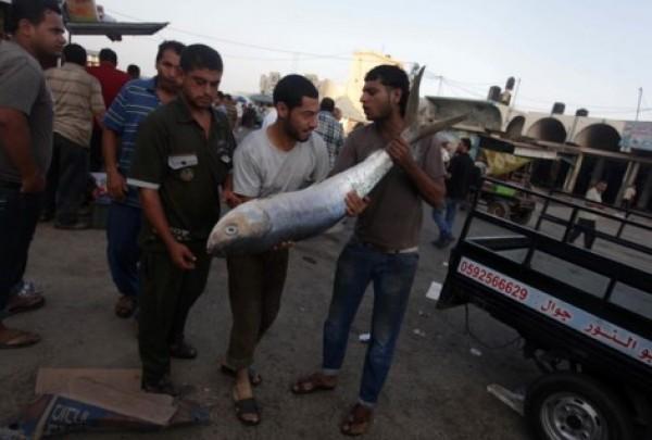 شاهد بالصور توافر للأسماك بغزة 3909985371.jpg