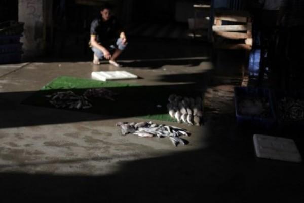 شاهد بالصور توافر للأسماك بغزة 3909985372.jpg
