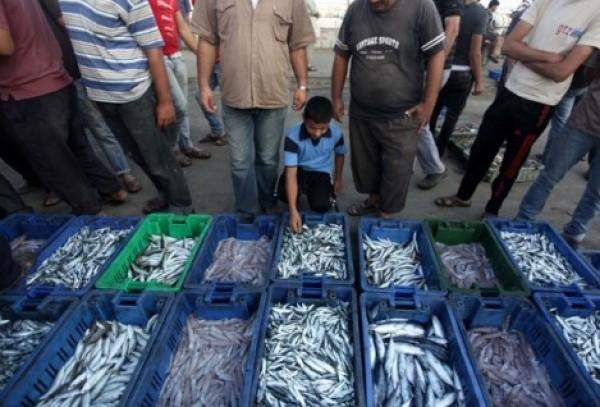 شاهد بالصور توافر للأسماك بغزة 3909985373.jpg