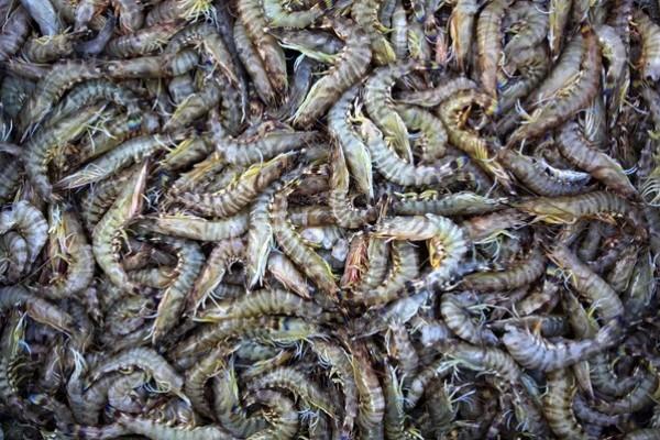 شاهد بالصور توافر للأسماك بغزة 3909985374.jpg