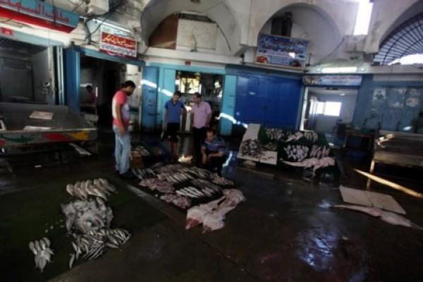 شاهد بالصور توافر للأسماك بغزة 3909985375.jpg
