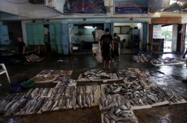 شاهد بالصور توافر للأسماك بغزة 3909985377.jpg