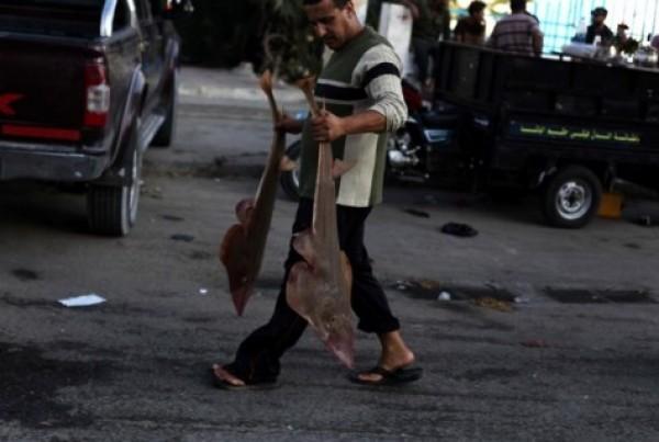 شاهد بالصور توافر للأسماك بغزة 3909985381.jpg