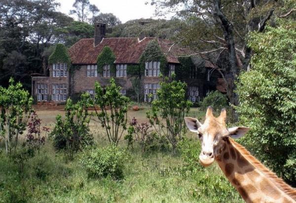 نيروبي أحببت الزرافة يمكن تبيت