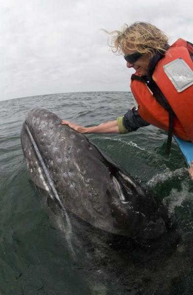 مداعبة الحوت الازرق اضخم المخلوقات