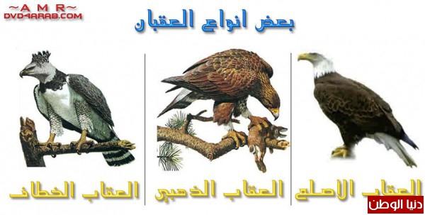 """ومعلومات أقوى الطيور الجارحة العالم """" العقاب""""2013, تقرير 3910012069.jpg"""