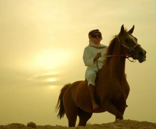 تقريرمصوّر الخيول العربية الأصيلة,صور ومعلومات الخيول العربية2014, معلومات 3910014058.jpg