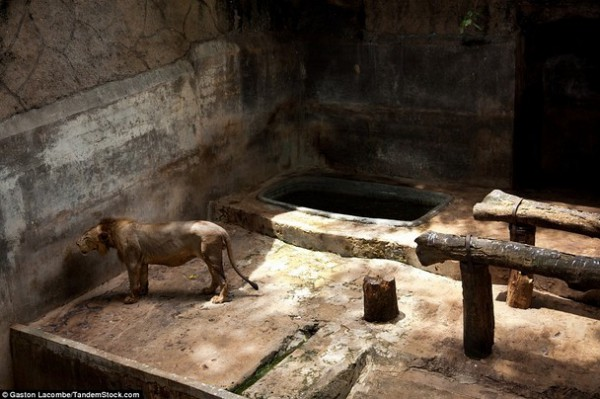 الحيوانات الأسيرة وراء القضبان 2013, لحيوانات حزينة وحائرة 3910024089.jpg