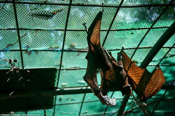 الحيوانات الأسيرة وراء القضبان 2013, لحيوانات حزينة وحائرة 3910024090.jpg