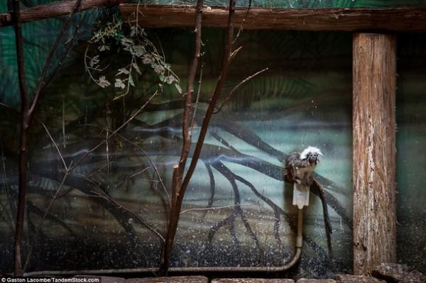 الحيوانات الأسيرة وراء القضبان 2013, لحيوانات حزينة وحائرة 3910024091.jpg