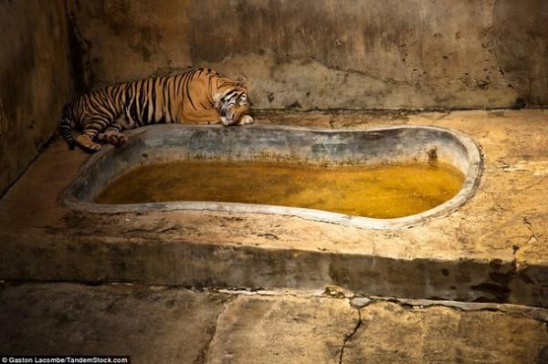 الحيوانات الأسيرة وراء القضبان 2013, لحيوانات حزينة وحائرة 3910024092.jpg