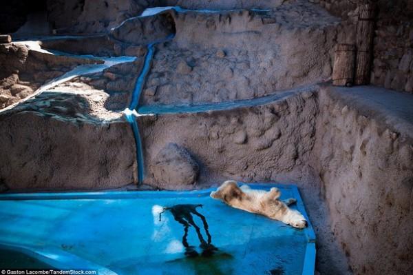 الحيوانات الأسيرة وراء القضبان 2013, لحيوانات حزينة وحائرة 3910024093.jpg
