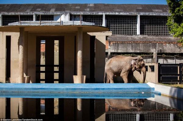 الحيوانات الأسيرة وراء القضبان 2013, لحيوانات حزينة وحائرة 3910024095.jpg