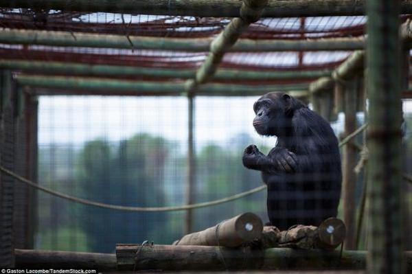 الحيوانات الأسيرة وراء القضبان 2013, لحيوانات حزينة وحائرة 3910024097.jpg