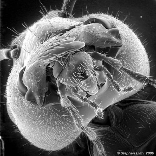 وحوش المجهر 2014 -صور مرعبة المجهر 2014