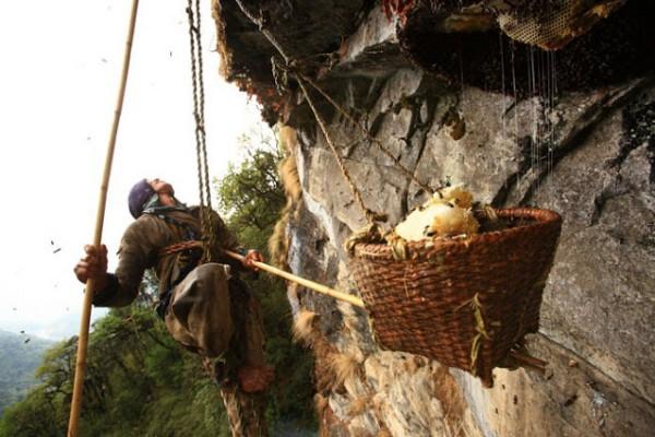 صراع العسل الجبال