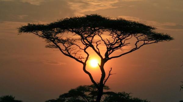 غروب الشمس بطرق جمالية 3910085457.jpg
