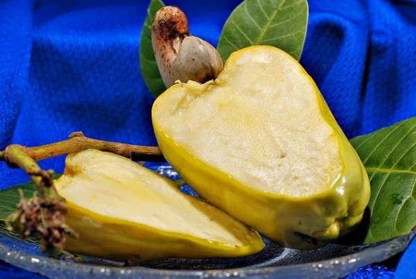 نبات الكاجو يستخرج من شجرة استوائية حيث تثمر فاكهة تفاح الكاجو والمكسرات  المعروفة باسم الكاجو وهو عبارة عن بذور تفاح الكاجو. وتعود نشأة شجرة الكاجو  إلى ...