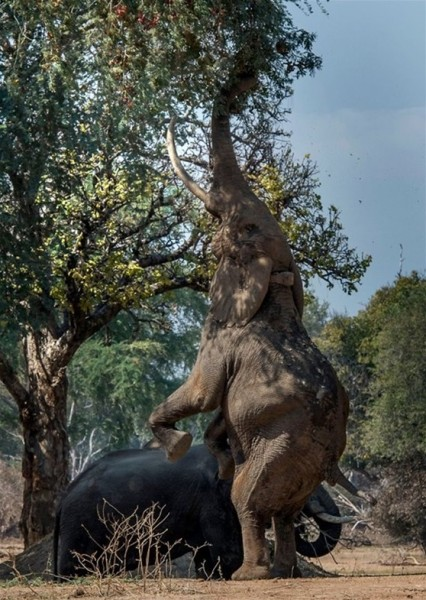 Africa sex on trees