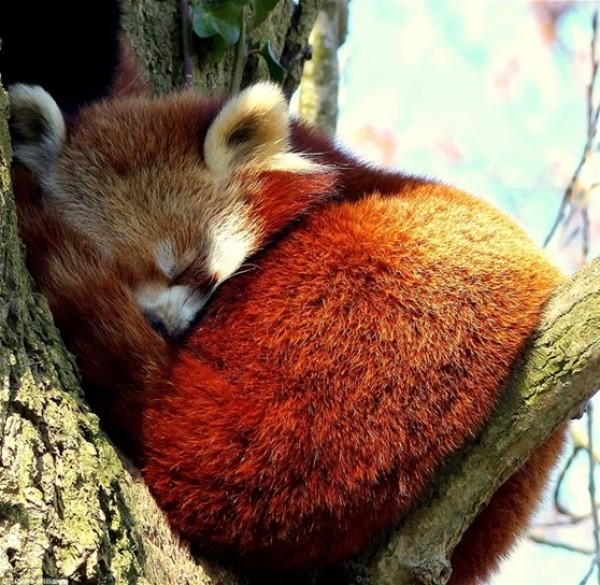 أفضل صور في مسابقة الحياة البرية بـ «لندن» 3910472530.jpg