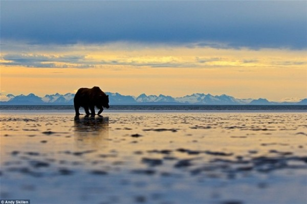 أفضل صور في مسابقة الحياة البرية بـ «لندن» 3910472531.jpg