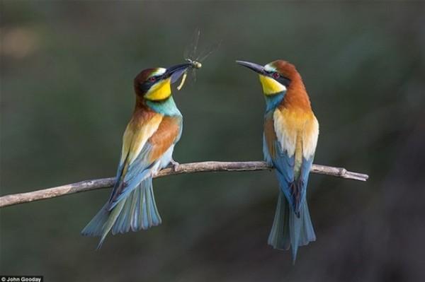أفضل صور في مسابقة الحياة البرية بـ «لندن» 3910472533.jpg